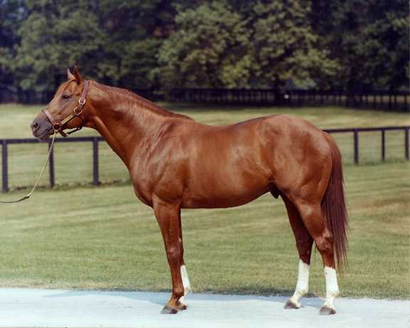 June 9, 1973: Secretariat wins the Belmont Stakes, becoming the first Triple Crown of Thoroughbred Racing winner since 1948.