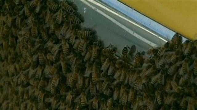 img-BEES SWARM IN DORCHESTER
