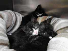 On Thursday, Baumli called the Coastal Humane Society and then took the cats to the shelter.