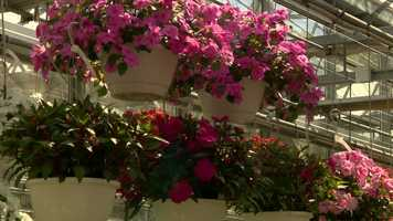 Don't forget about the hanging baskets you may have gotten for Mother's Day.