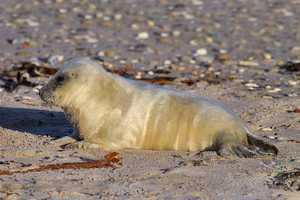 The seals are abundant due to decades of marine protection.
