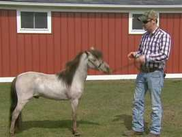 This 5 year old stallion is a two-time world champion.