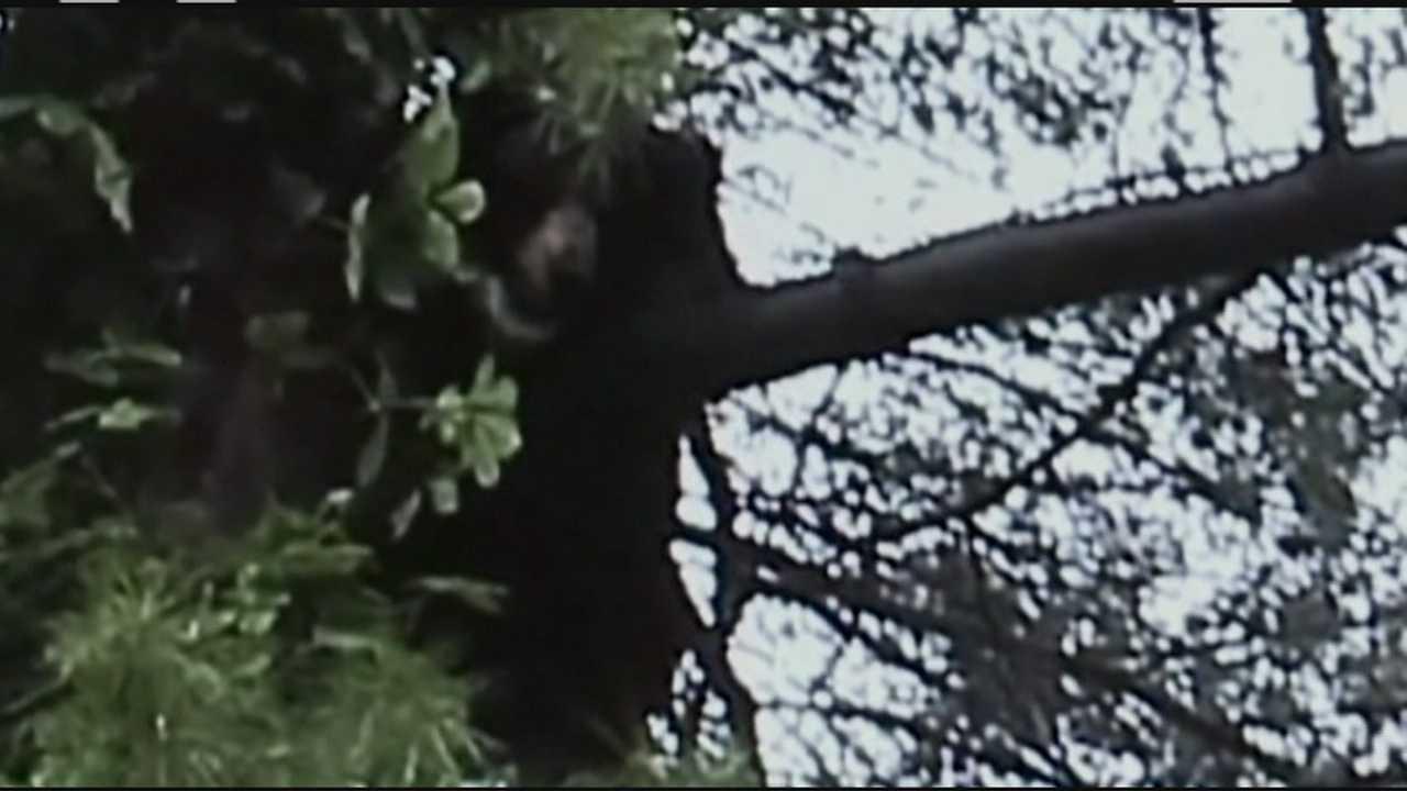 Bear euthanized after chasing dog