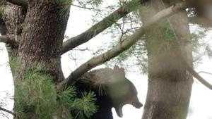 Bear shot in Newton