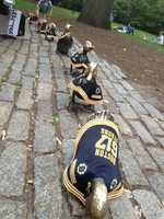 "Mrs. Mallard and her ducklings are ""Boston Strong"" with their 617 jerseys."