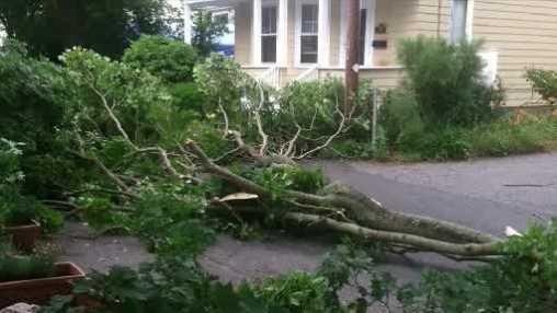 Tree down in Agawam