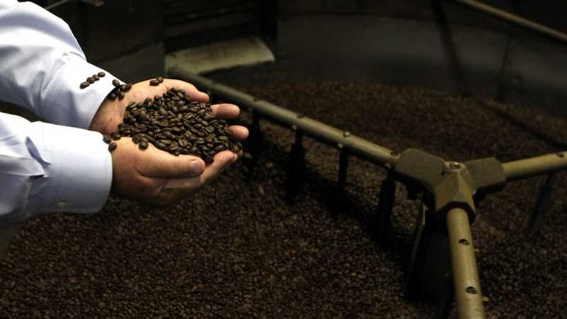 Stephen Beattie, Chief Executive Officer of Comfort Foods, Inc. looks through some freshly roasted beans. The business is located on Commerce Way in North Andover.
