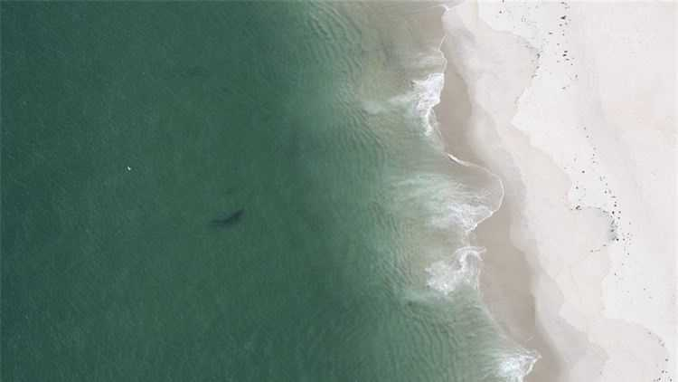 The shark was spotted during a survey flight off Chatham by the Cape Cod Shark Hunters.