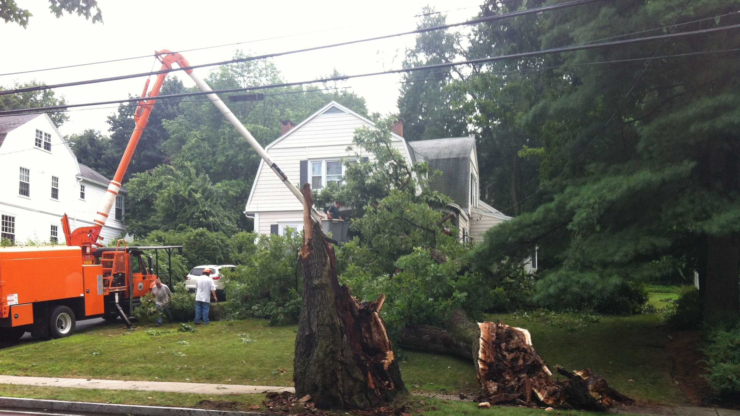 A severe thunderstorm brings down a tree in Reading.