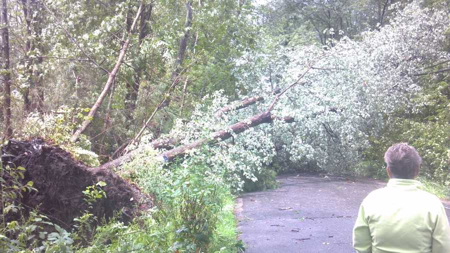 A tree toppled in Tewksbury.
