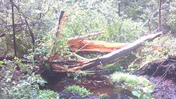 This damage was seen on Wolcott Street.