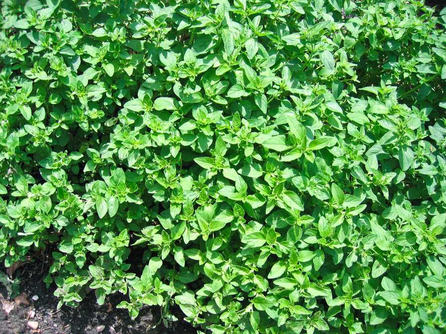 Fresh herbs can have a calming effect on the body.