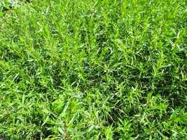 5. Fresh herbs