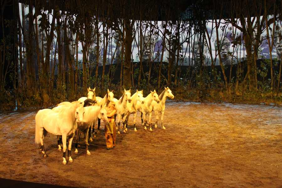In this scene, Elise Verdoncq performs with ten horses, all Arabian geldings, who are admired for their large eyes and high intelligence. Their white color in this scene appears dreamlike.