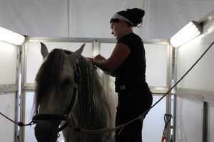 The trainers pay close attention to the horses to make sure they are comfortable and happy