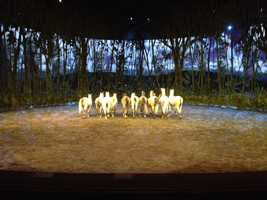 The horses learned a routine and perform in sync with each other.