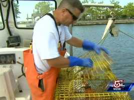 """The captain does a """"keep your catch"""" tour. All legally-sized lobsters can go home with Carli's passengers."""