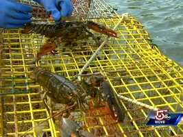 """Even without take-home prizes, this is a """"learn about lobstering"""" tour."""