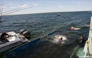 A 1,400 pound great white shark was tagged off the coast of Cape Cod Thursday.
