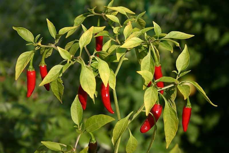 9.) Add a few hot peppers.