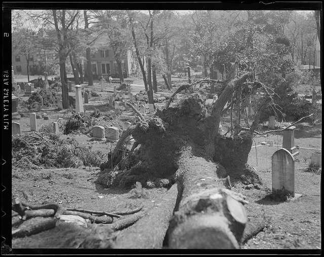 Falling trees destroyed cemetery headstones and mausoleums.