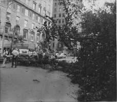 A tree lies in the middle of New York's Fifth Avenue near 94th Street after Hurricane Gloria passed through the city, Sept. 28, 1985. The hurricane caused considerable damage to parts of Long Island with heavy rains and strong winds.
