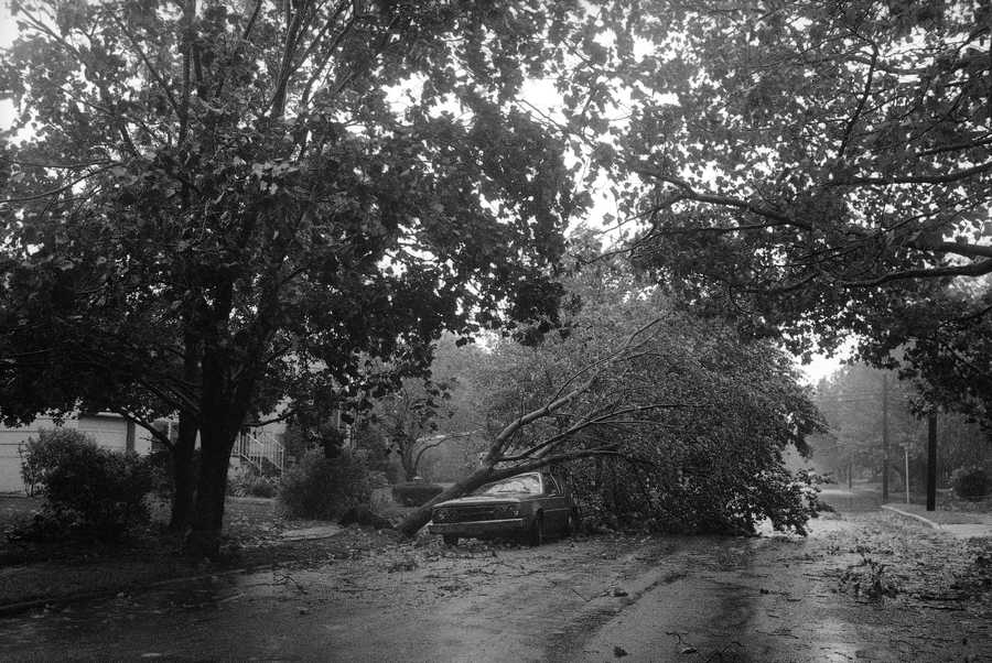 A tree lies on top of a car in Freeport, Long Island, N.Y., blown over by winds caused by Hurricane Gloria, Sept. 28, 1985. The hurricane swept through the New York area. More than half a million people fled inland from coastal areas along the East Coast as the hurricane thrashed the area with heavy winds and driving rains.