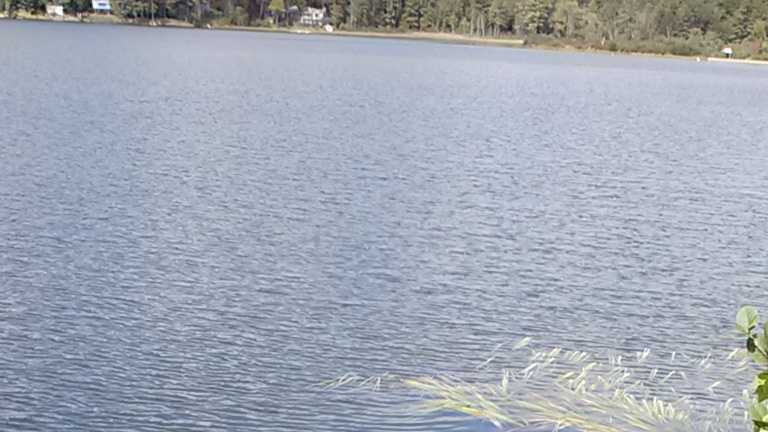 img-lyme pond rescue