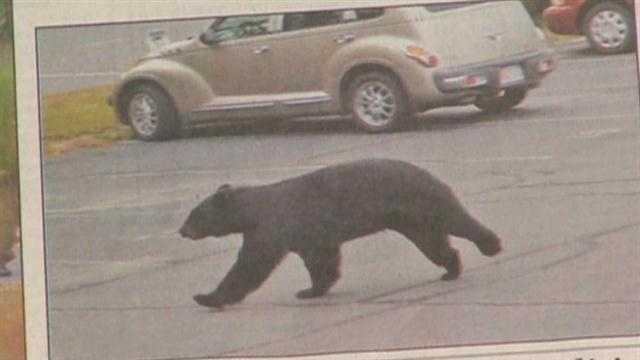 Athol Bear