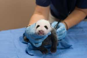 The National Zoo's beloved panda cam and all other live animal cameras from the zoo have gone dark with the government shutdown.The zoo itself will be closed to visitors starting Tuesday.