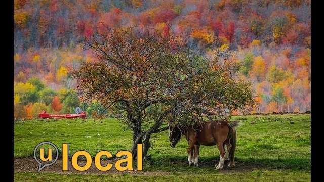 Fall Foliage 10.8.13