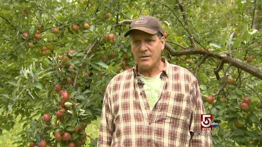 Stephen Wood owns Poverty Land Orchards in Lebanon, New Hampshire.