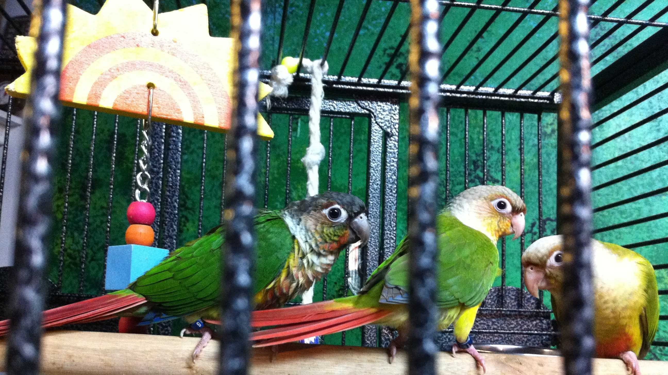A rare parrot was stolen from a Weymouth pet store.