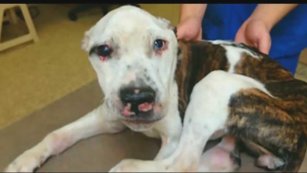 Man charged in Puppy Doe animal abuse case