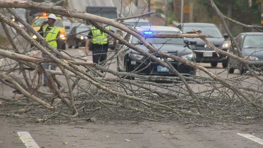 An early season storm brought strong, gusty winds to the region, pulling down tree branches across Massachusetts.