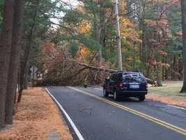 A tree blocks the 300 block of Gardner St. in Hingham.  It's near adjoining town of Rockland.