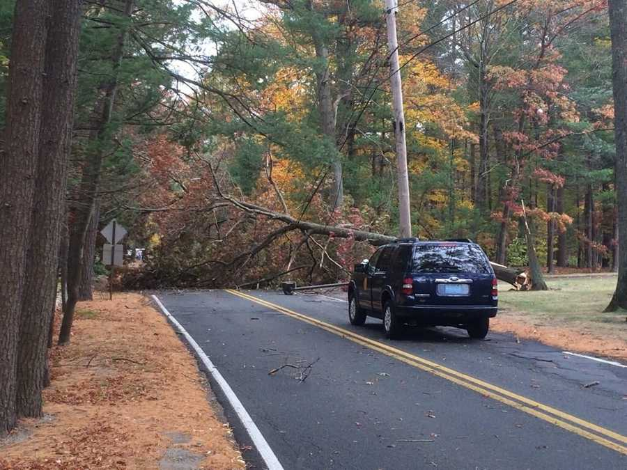 A tree blocks the300 block of Gardner St. in Hingham. It's near adjoining town of Rockland.