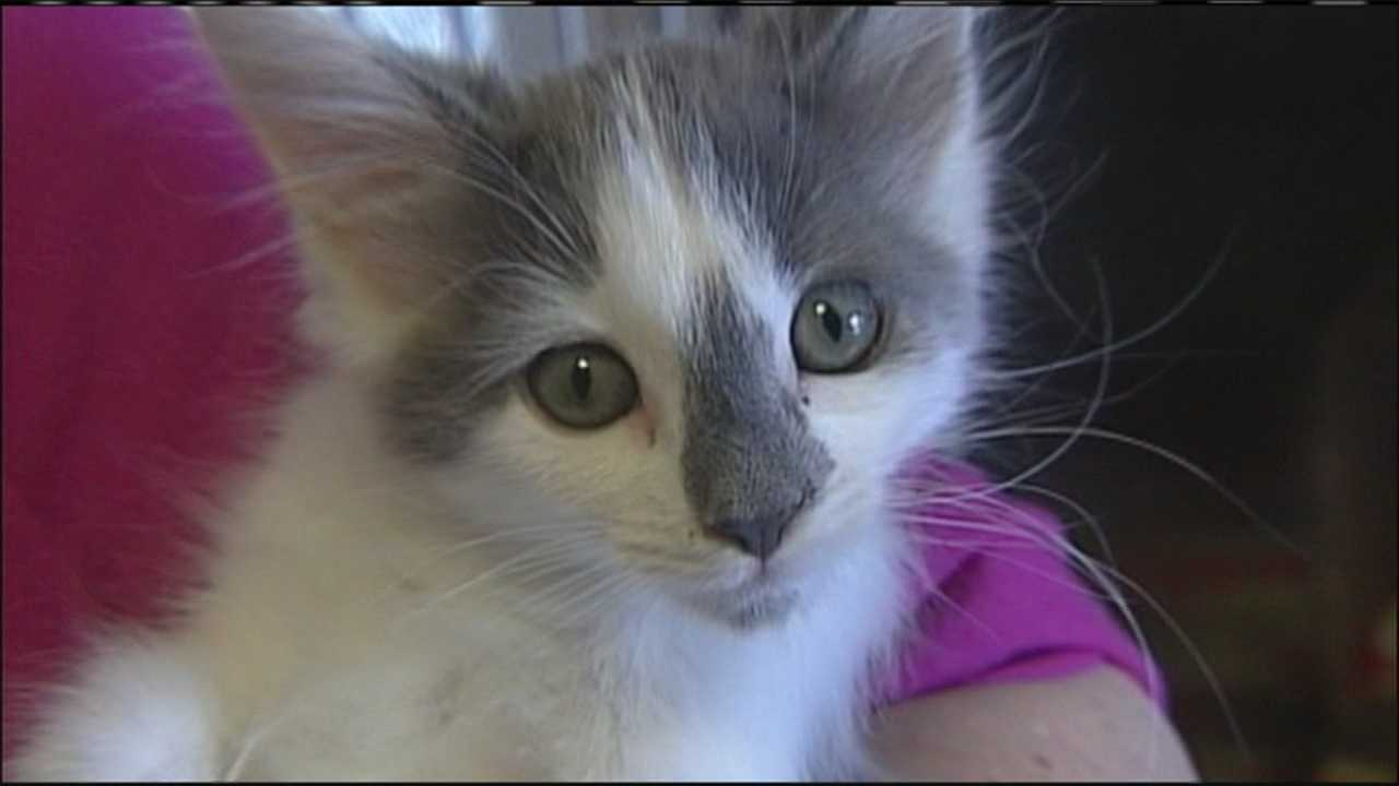 img-Kitten being adopted after social media prank