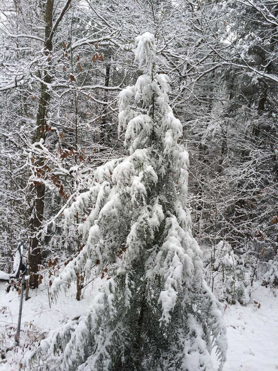 The first snow of the season fell in many towns across northern New Hampshire. Check out photos from around the state!The scene here is in Thornton.
