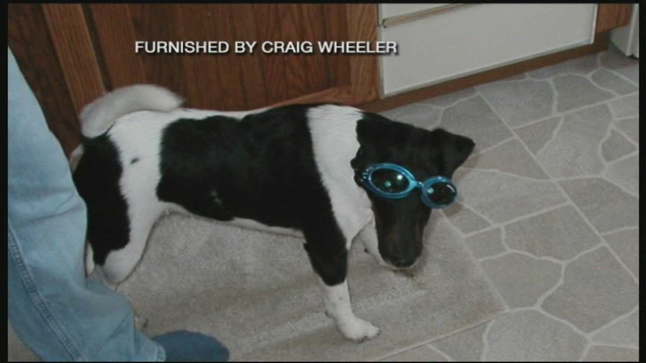 Family's dog shot and killed in Boscawen