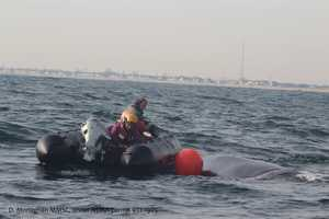 """Rescuers say the outlook for a young whale freed from a tangle of fishing rope Friday off the New Jersey coast is """"quite good."""""""