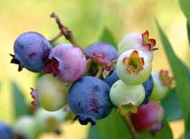 5.) Wild blueberries