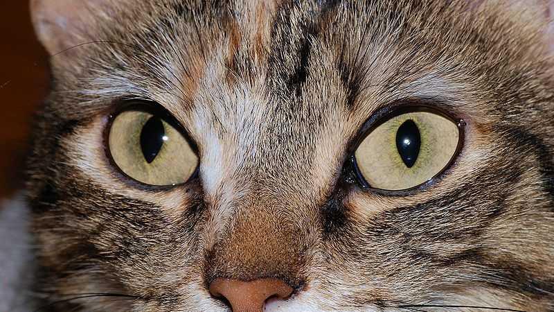Generic cat 1121