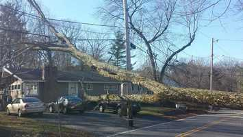 Burlington police urged people to avoid the area around 44 Locust St. while the town's Department of Public Works tries to cut up the rotted tree and get it off the power lines.