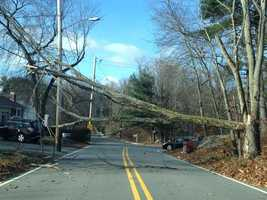 Locust Street in Burlington was closed Sunday morning after wind knocked a massive tree onto power lines, police said.