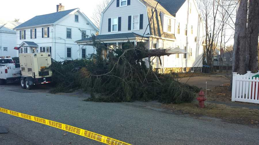 This tree took down wires in Natick.