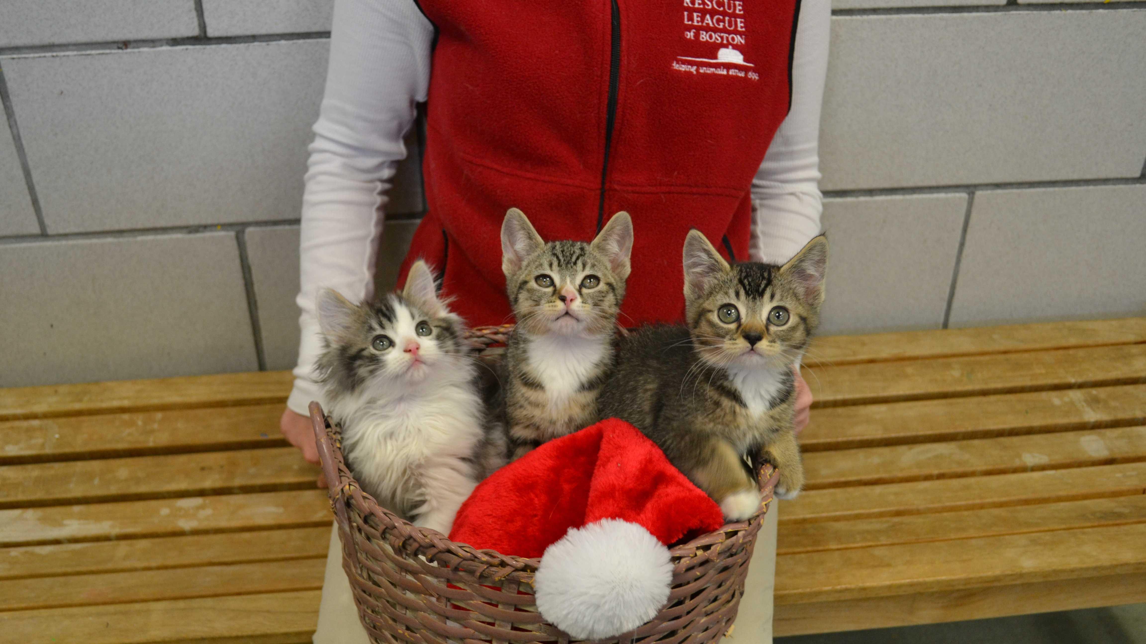 Shelter kittens