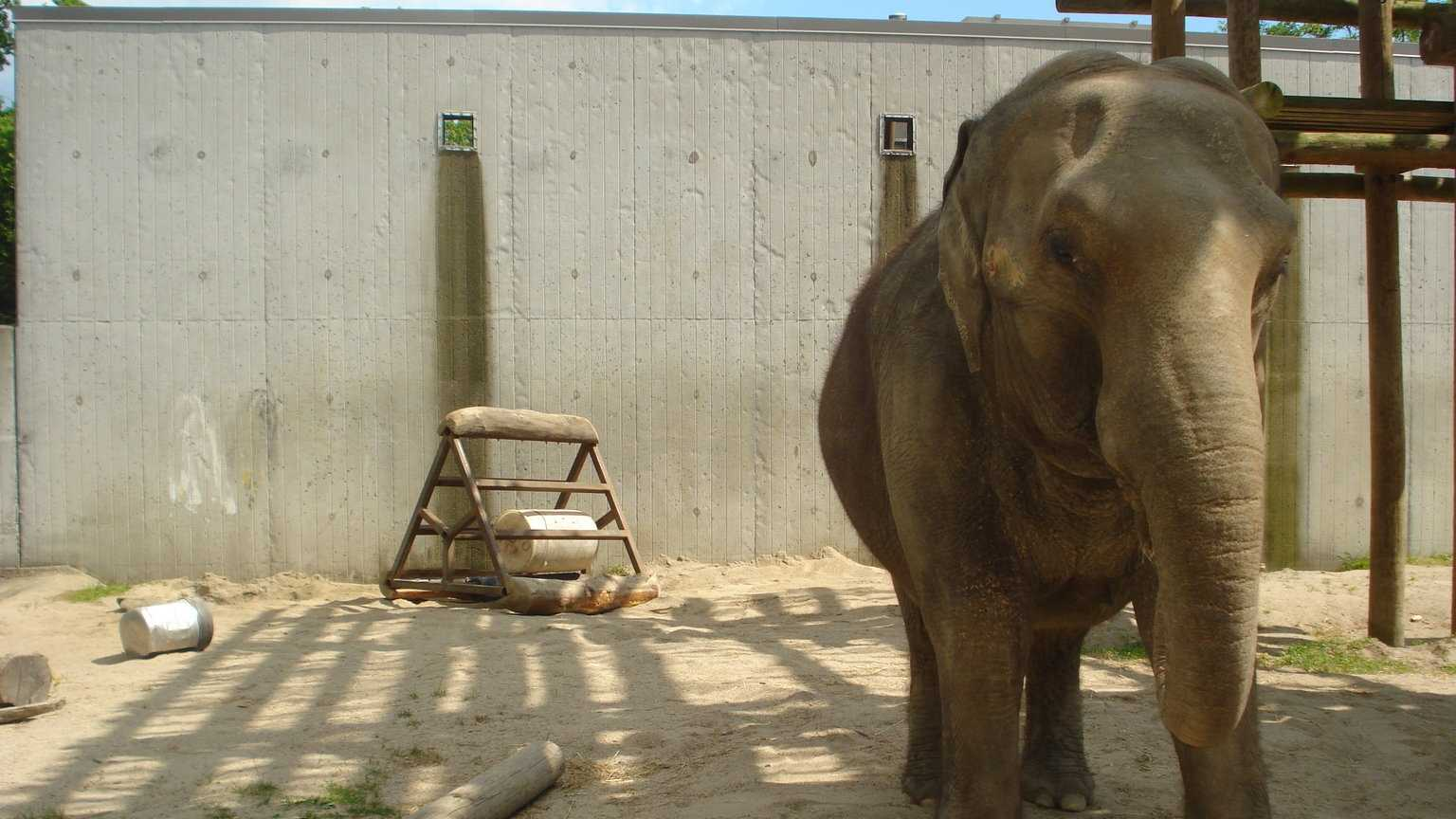 Buttonwood Zoo Ruth Elephant 010714