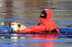 Firefighters in the Cape came to the rescue of a dog that fell through a pond Wednesday.