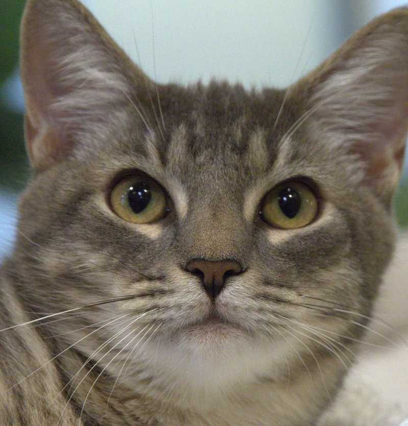 Click here to meet more lovable pets looking for homes at the MSPCA!